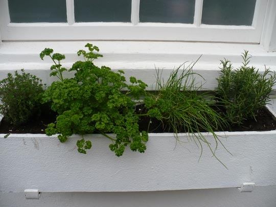 Gardening Idea Window Boxes That Don 39 T Face The Street