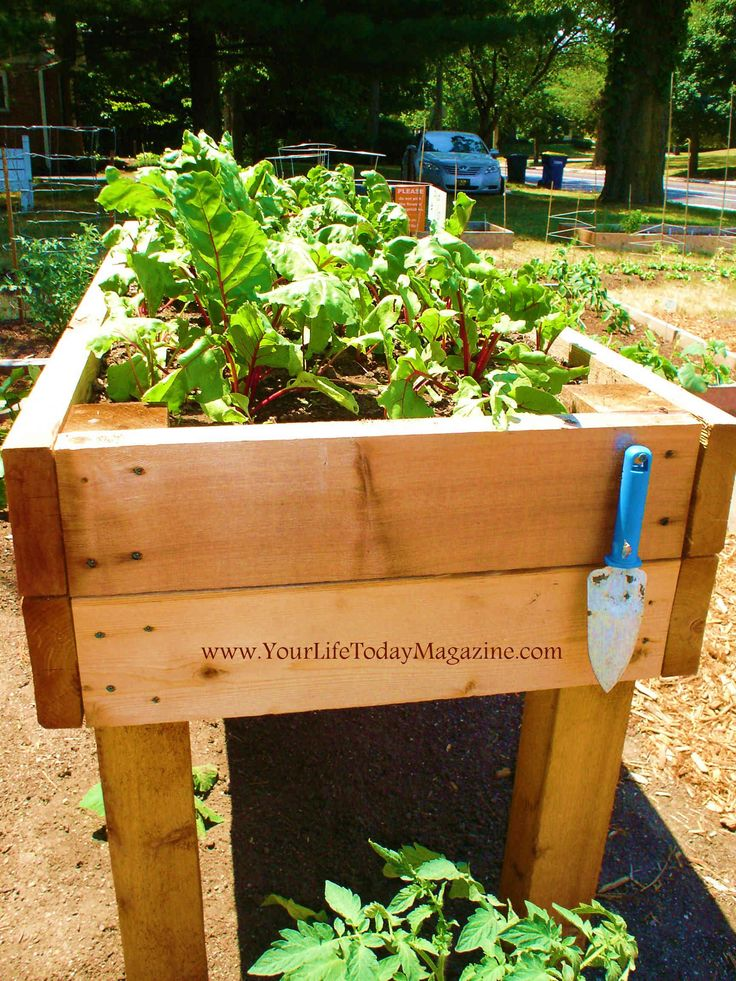 improvement stores now carry raised bed kits. Raised beds with legs ...