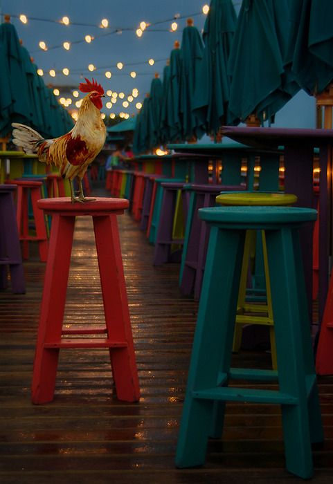 chicken! on happy stools with pretty lights.