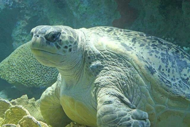 New England Aquarium turtle Turtles it SHELL be Pinterest
