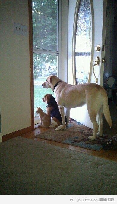 Watching Tiger vs Dog