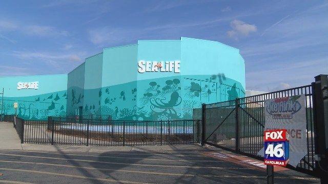 New In Charlotte The Sea Life Aquarium Charlotte Hot