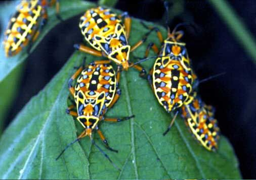 Colorful Insects | Insects...Bugs...Spiders...Creepy ...
