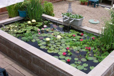 Concrete block pond cabin new uses for old things for Cinder block koi pond