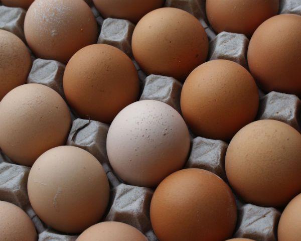jajka rozmiary i numery