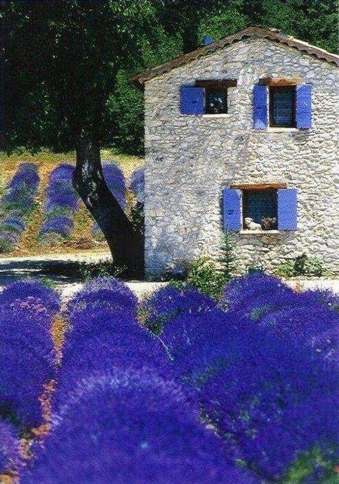 Lavender fields in Provence | http://flower-fields-473.blogspot.com | Life in CMYK