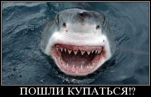 фото приколы акула