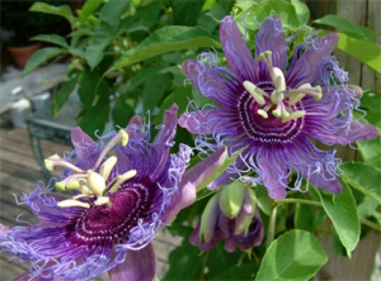 These Blooming Plants Can Take The Heat All Summer