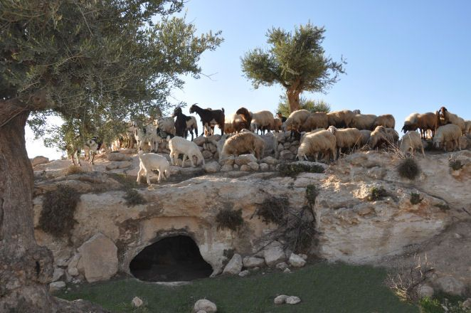 shepherds field bethlehem