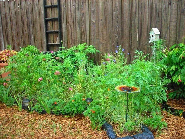 Wild Backyard Garden : Wild flower garden  My back yard photos  Pinterest
