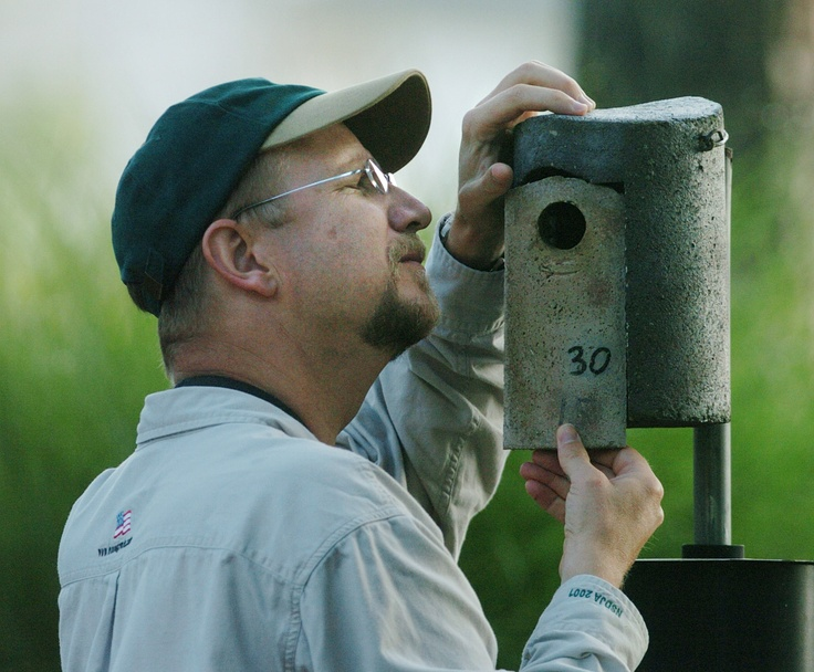 Davidson College professor Mark Stanback inspects a bluebird-nesting box.