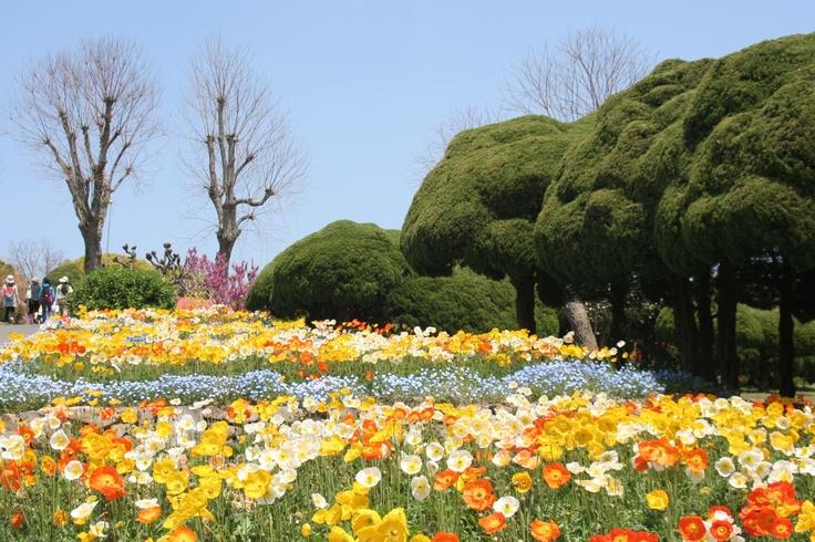 Fukuoka Nokonoshima Island Park  Flowers  Pinterest