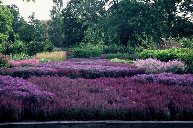 Piet oudolf piet oudolf gardens pinterest for Piet oudolf plant list