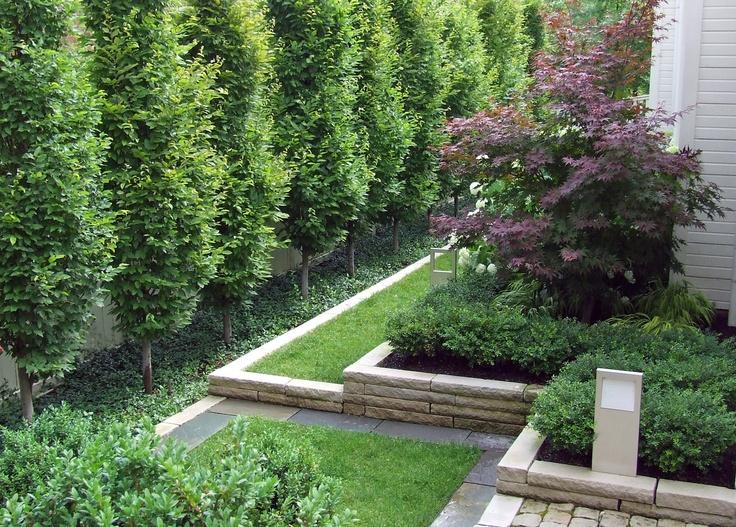European Garden Design Ideas : Modern garden european hornbeam my secret