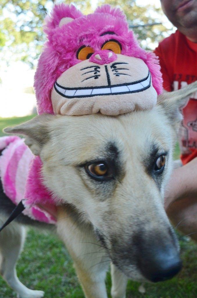 petsmart halloween costumes for dogs
