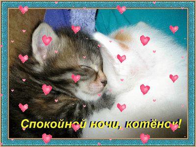 Открытка спокойной ночи котёнок 15
