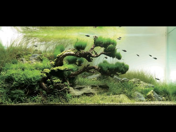 Takashi Amano Aquarium Aquascaping : Japanese garden inspired aquarium by Takashi Amano
