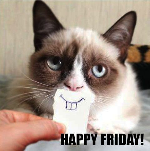 Happy Friday! (=^‥^=) #tgif | funny cats | Pinterest