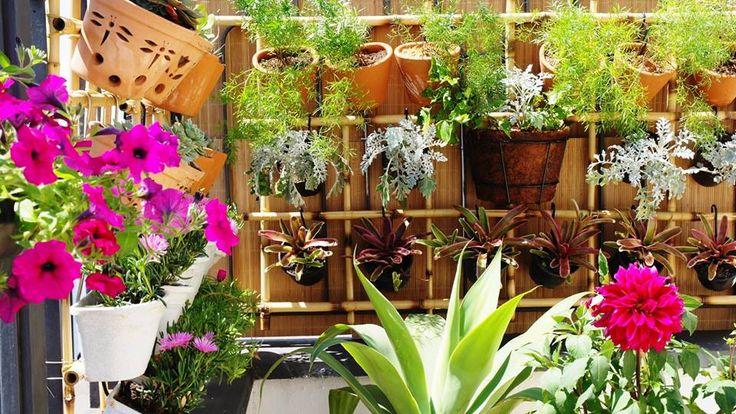 Jardim vertical em varanda de cobertura, em PinheirosSP Plantas de