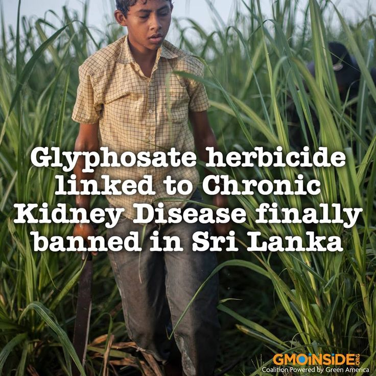 Studies conducted by Dr. Channa Jayasumana of the Rajarata University show that the chemical Glyphosate found in agrochemicals has an adverse effect on humans when it enters the system. More here: http://dailynation.lk/glyphosate-herbicide-linked-ckdu-finally-banned #roundup #contamination #GMOs #StopMonsanto