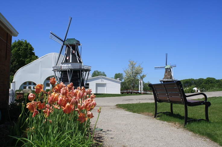 Windmills & Tulips Holland Michigan | ~*A Place I Call Home*~ | Pinte ...