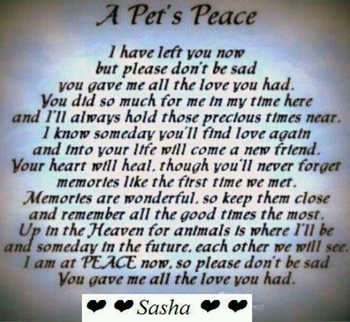for everyone who has lost a beloved pet inspirational