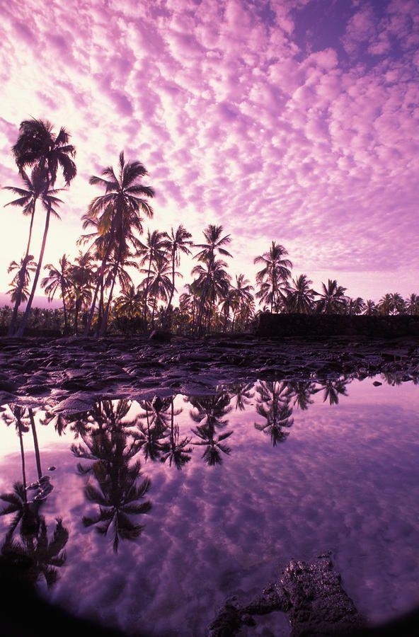 Hawaii, Big Island, Pu'uhonua O Honaunau (Place of Refuge) by Carl Shaneff