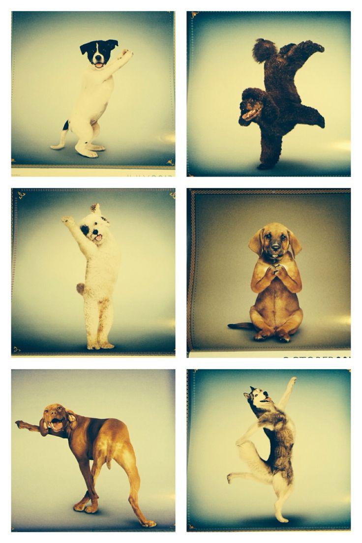 Cute Yoga Dogs Yoga dogs