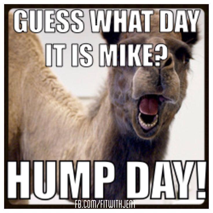 Hump day camel geico