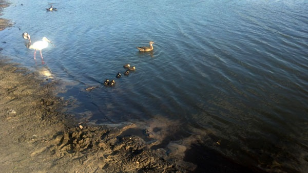 #GetOutside Day 22 - A favorite place: Birds at the lake.