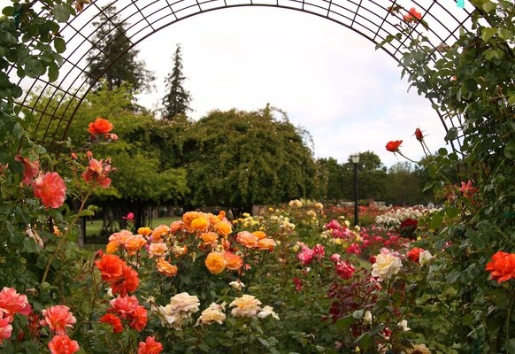 Zora Wanted To Know If There Are Roses In Ca Yep San