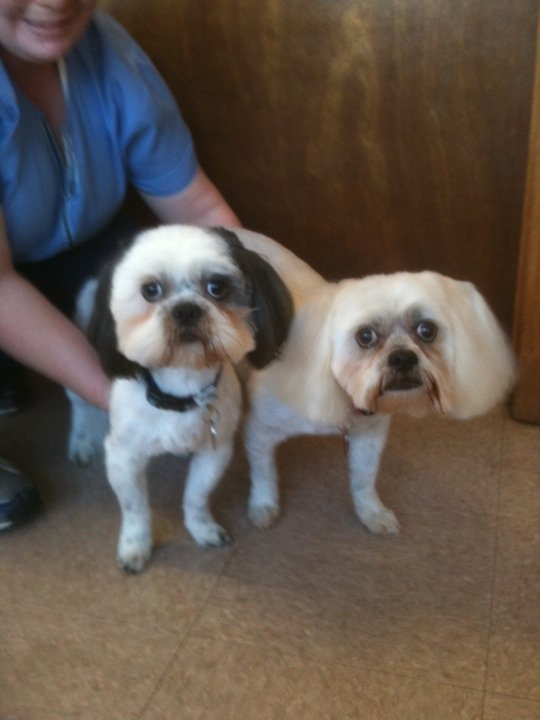 """Lucky"" & ""Snuggles"" looking good after grooming by Amanda."