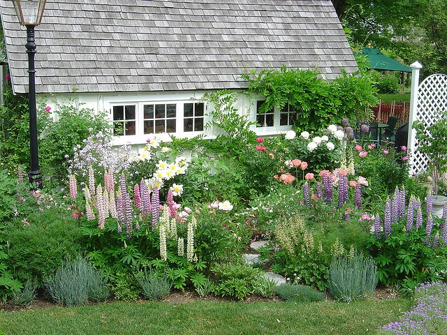 Beautiful perennial garden | Andrew Henwood