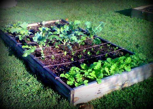 Enjoy Gardening Google Search Gardening Pinterest