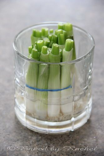 Grow your own green onions...much faster than celery. Next time you buy green onions, save the bulb and toss it in a jar of water...you'll have a whole new bunch in 12 days!