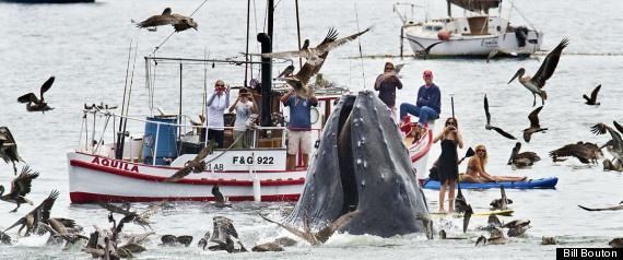 Humpback Whale Close Encounter Off California Coast (incredible photos)