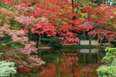 Fall foliage destinations japanese garden ft worth texas