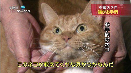 """zenigata: on 2chan.net [ExRare] """""""