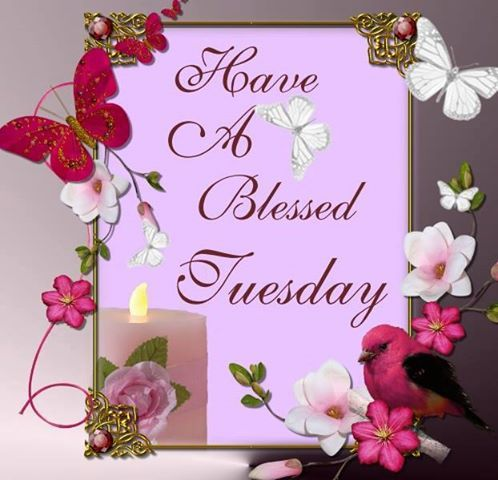 com  happy tuesday ku   have great tuseday