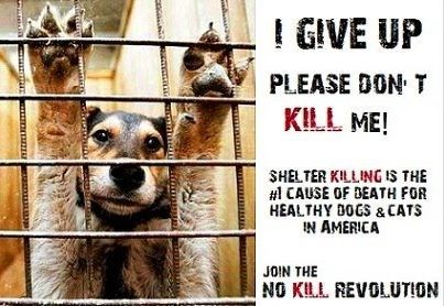 how to stop kill animal shelters