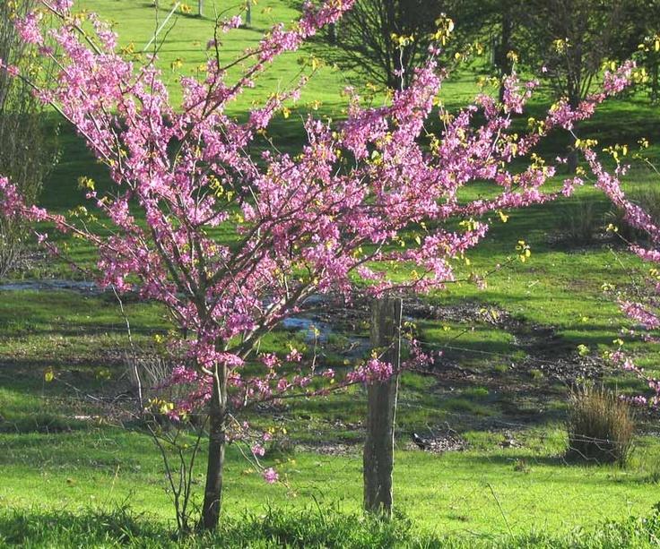 Arboles Pequenos Para Jardin #1: D0262e4436e7d90d0dc38833b969ca42.jpg