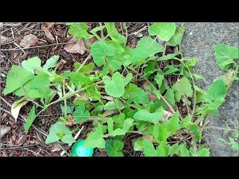 Homemade weed killer for garden pinterest