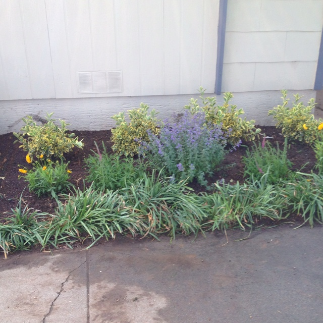 Front yard flower bed design folat for Front yard flower beds
