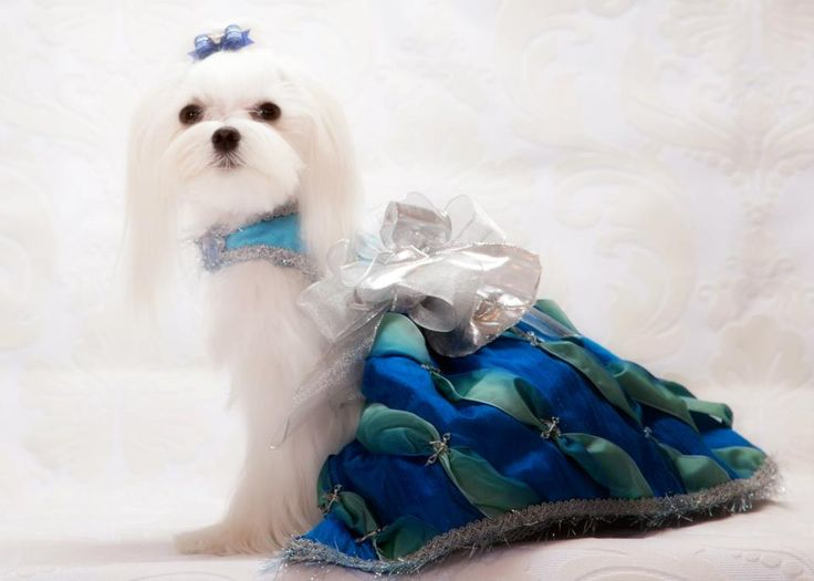 Stella wears the Cinderella Dress by Kiki Hamann. Photography by Jessica Lee.    <a  data-cke-saved-href=