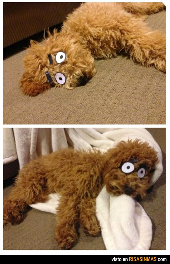 Convierte a tu mascota en un perro de cómic.