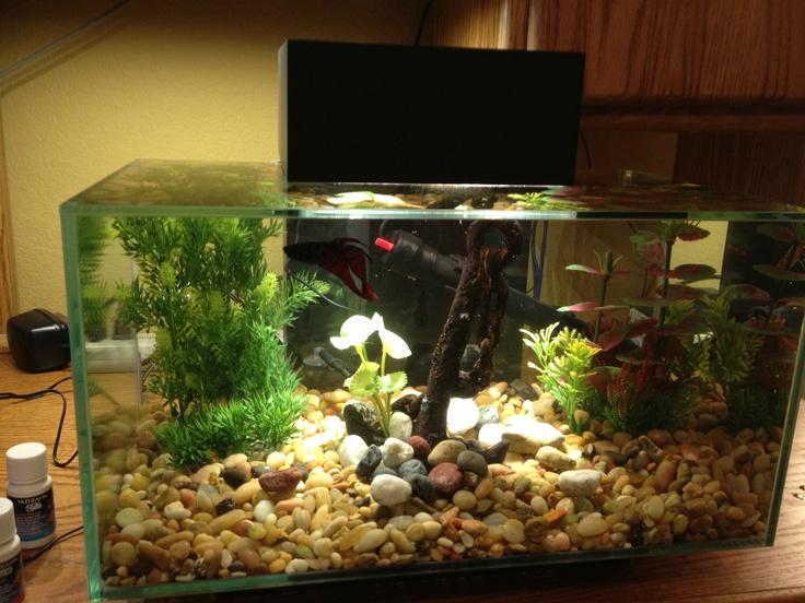 Pretty small scale fish tank