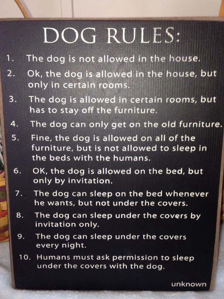 Dog Rules   Funny Stuff   Pinterest