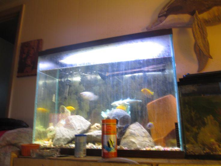 55 gallon fish tank tall 55 gallon aquarium set 80 in for 55 gallon fish tank size