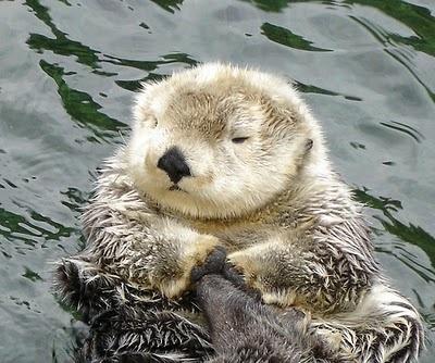 Otterific