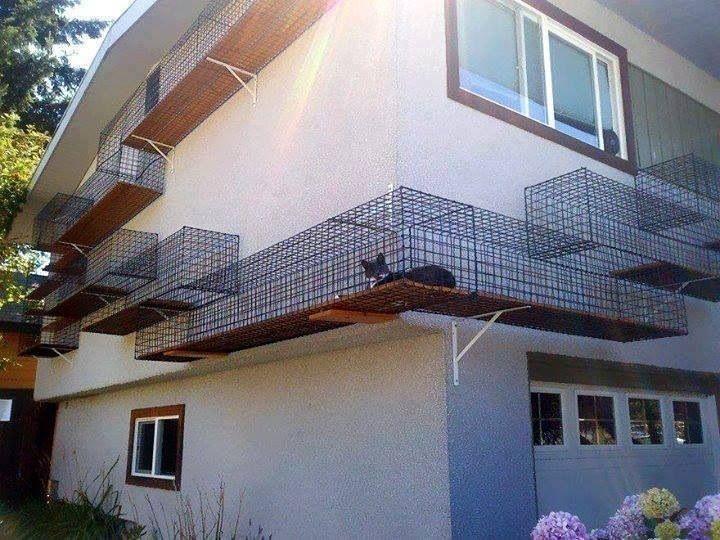 Outdoor cat playground